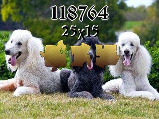 Puzzle №118764