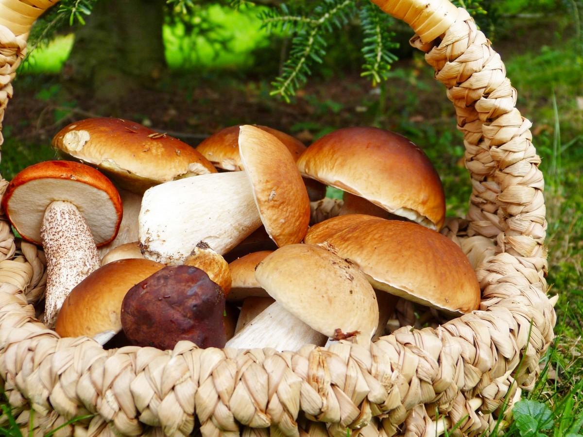 Puzzle Sammeln Puzzle Online - Mushrooms