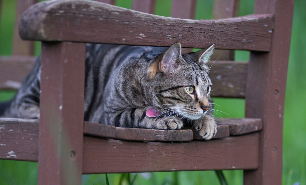 Puzzle Sammeln Puzzle Online - Cat on the bench