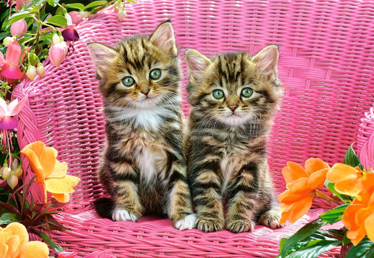 Puzzle Sammeln Puzzle Online - Kittens in chair