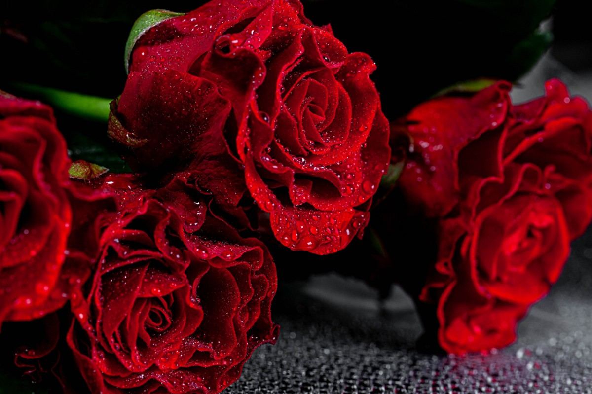 Puzzle Sammeln Puzzle Online - Red roses