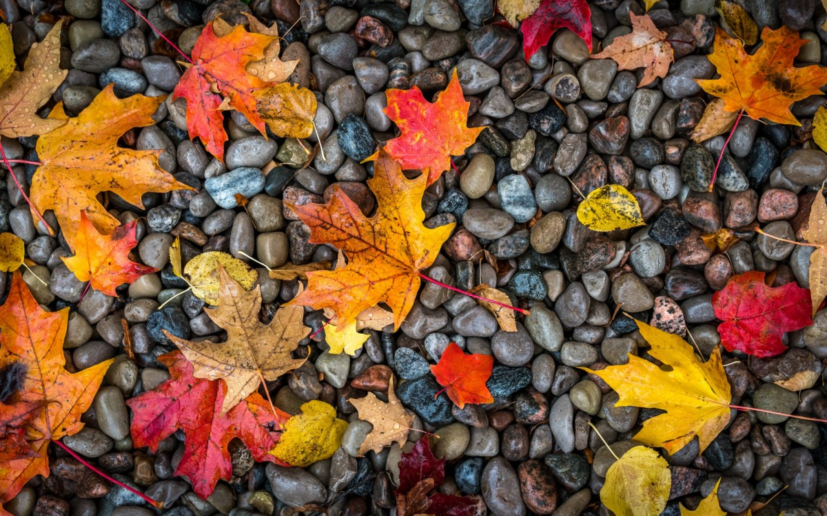 Puzzle Sammeln Puzzle Online - The leaves on the stones