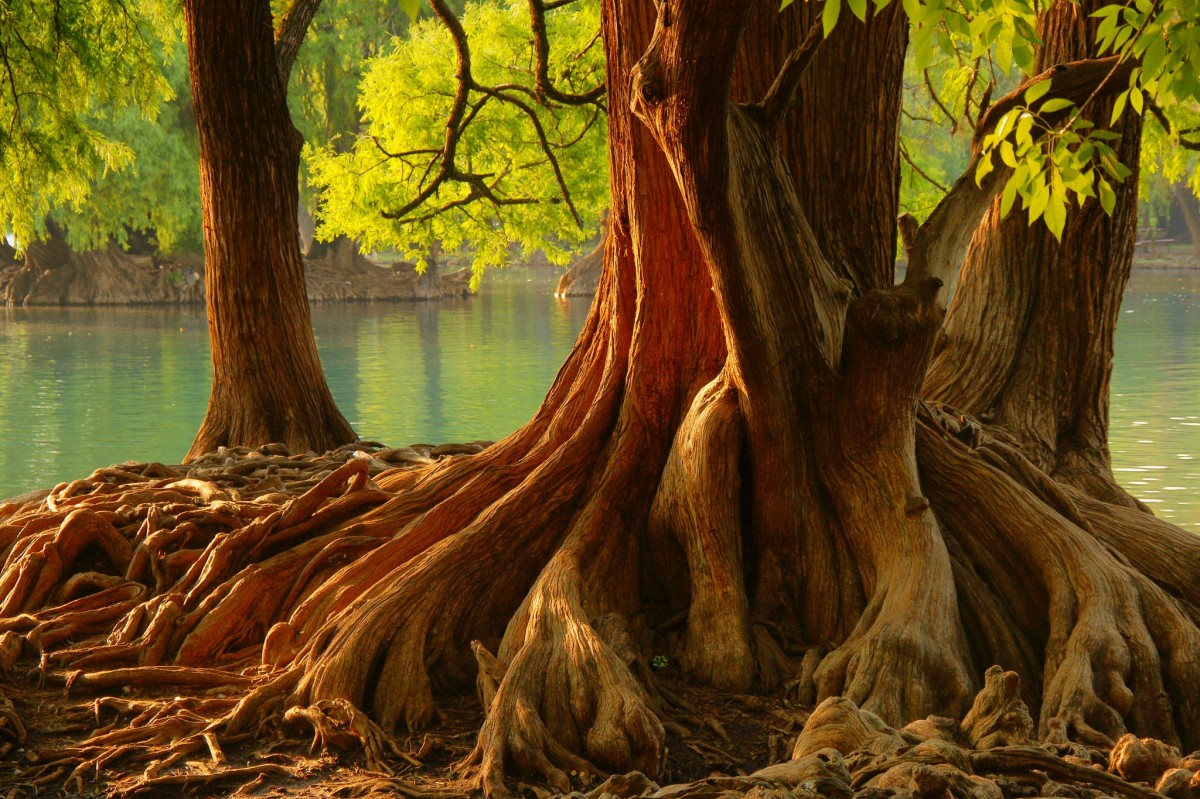 Puzzle Sammeln Puzzle Online - A mighty tree