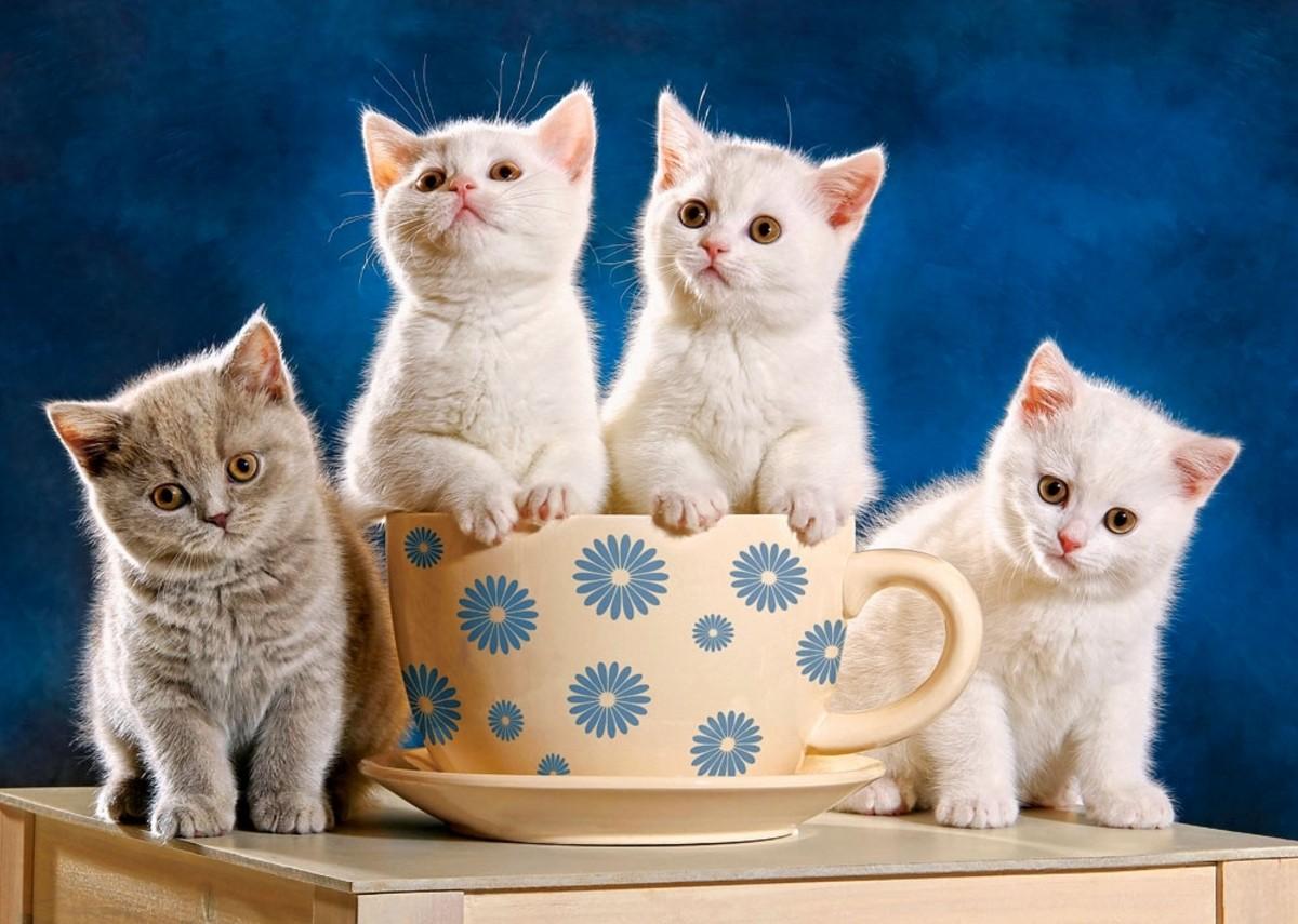 Puzzle Sammeln Puzzle Online - Kittens