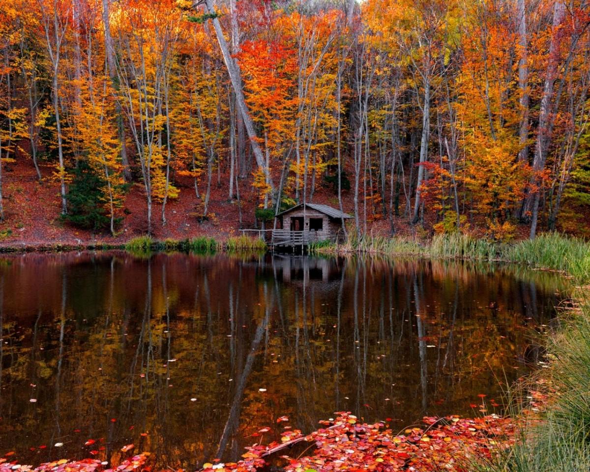 Puzzle Sammeln Puzzle Online - Autumn