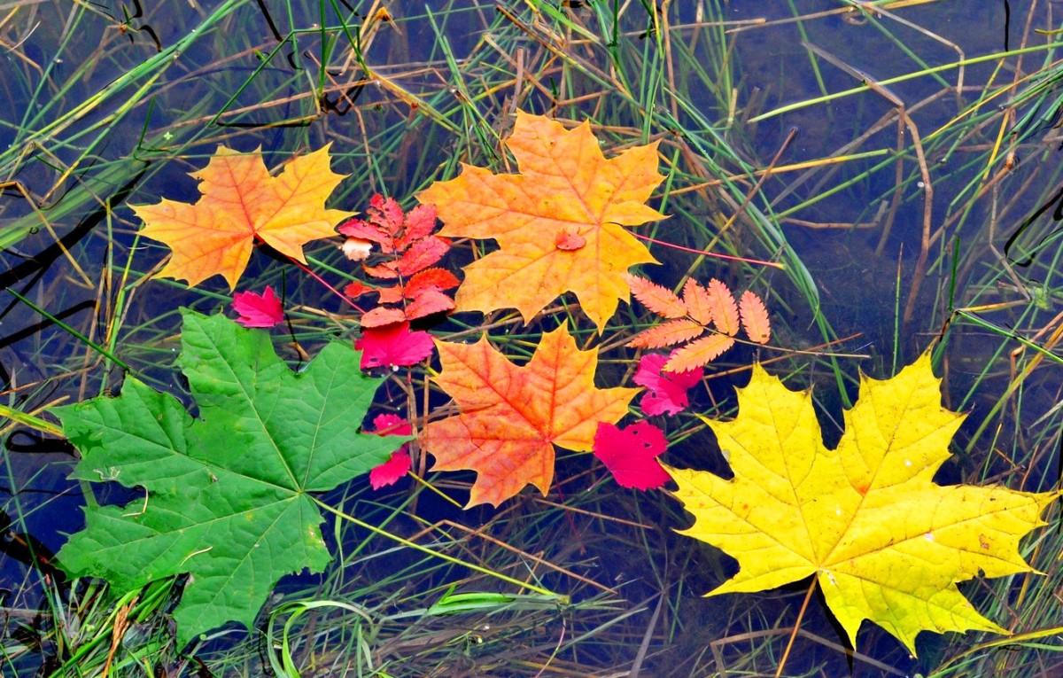 Puzzle Sammeln Puzzle Online - Autumn leaves