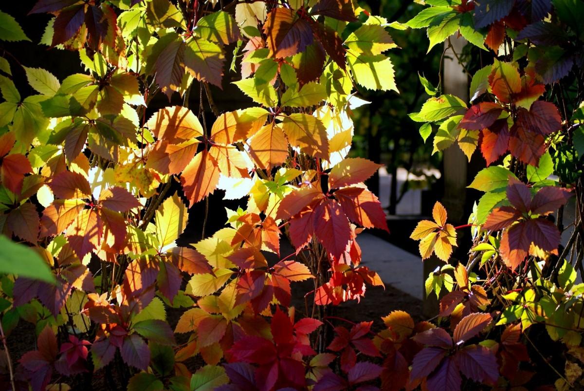 Puzzle Sammeln Puzzle Online - autumn lsite