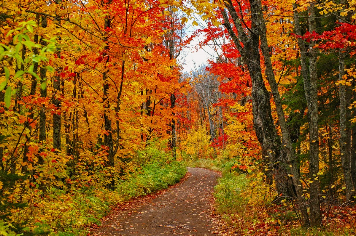 Puzzle Sammeln Puzzle Online - Autumn forest