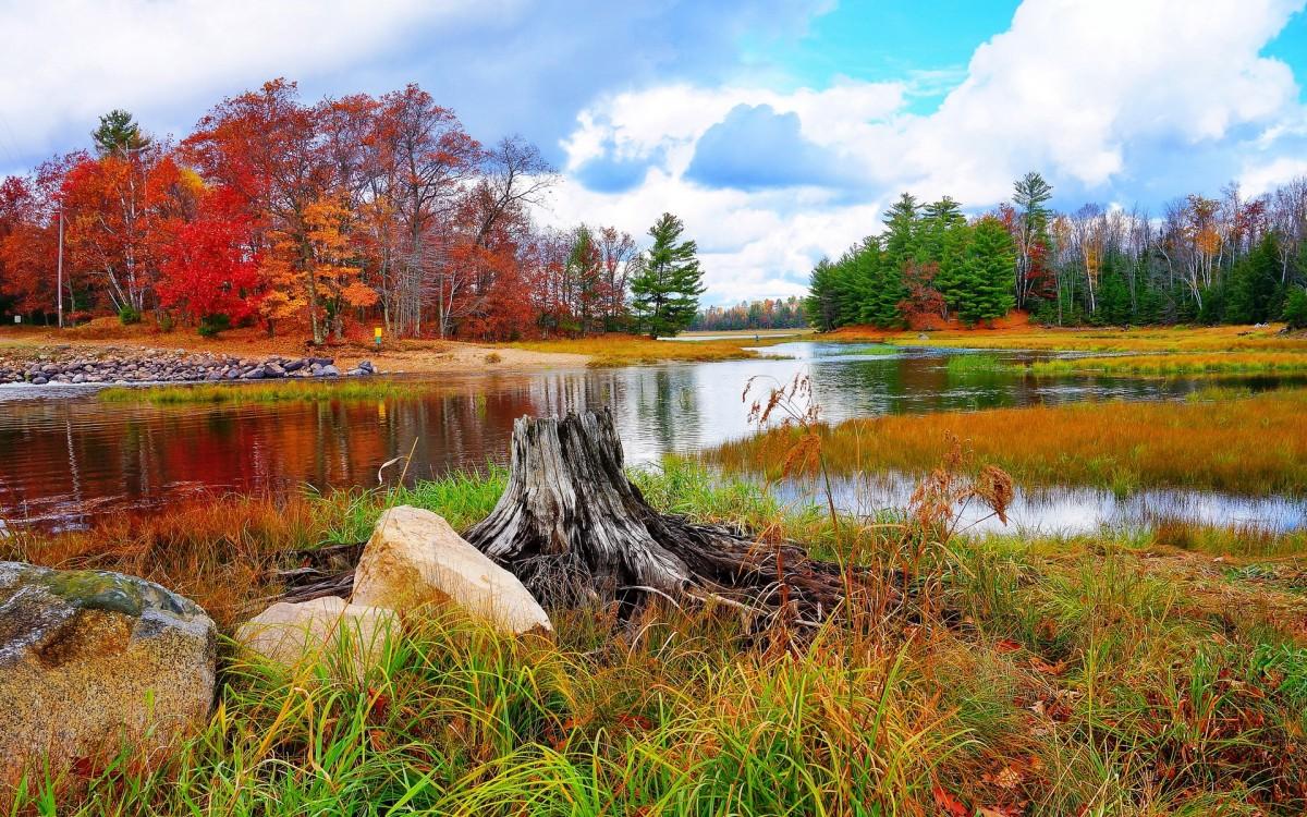 Puzzle Sammeln Puzzle Online - Autumn landscape
