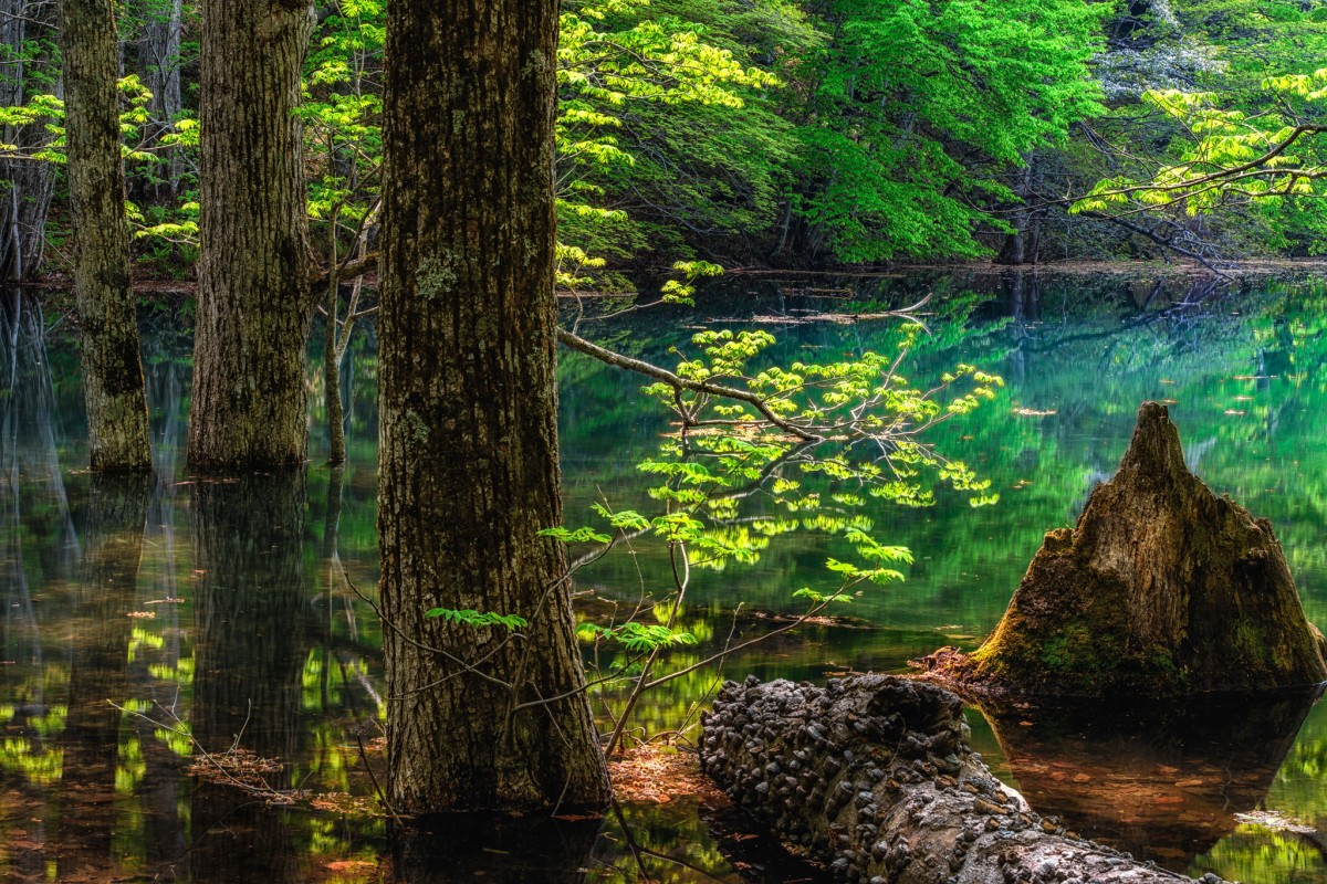 Puzzle Sammeln Puzzle Online - Lake of the woods