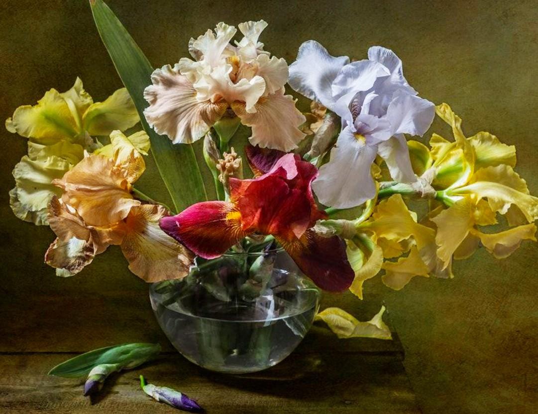 Puzzle Sammeln Puzzle Online - Colored irises