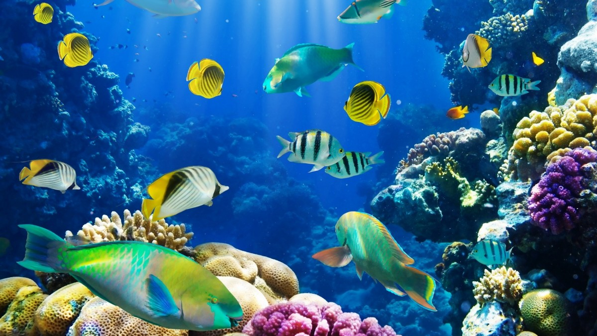 Puzzle Sammeln Puzzle Online - Fish under water