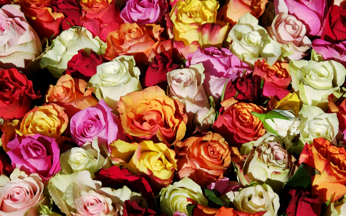 Puzzle Sammeln Puzzle Online - Roses in stock