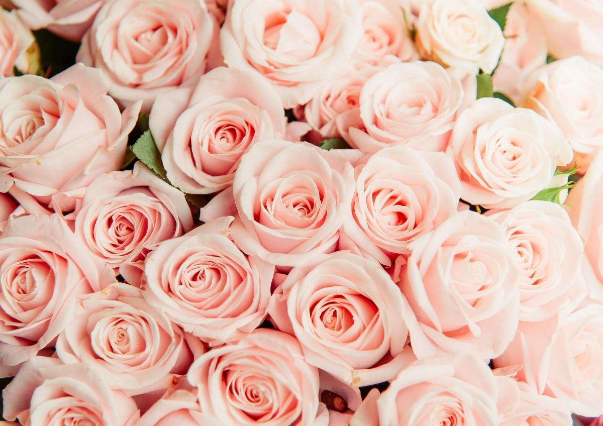 Puzzle Sammeln Puzzle Online - Pink flowers