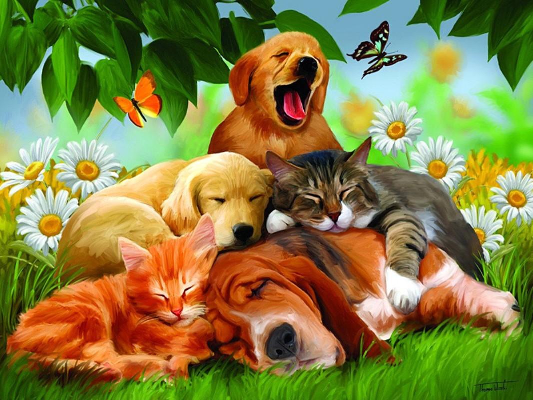 Puzzle Sammeln Puzzle Online - Sweet dreams