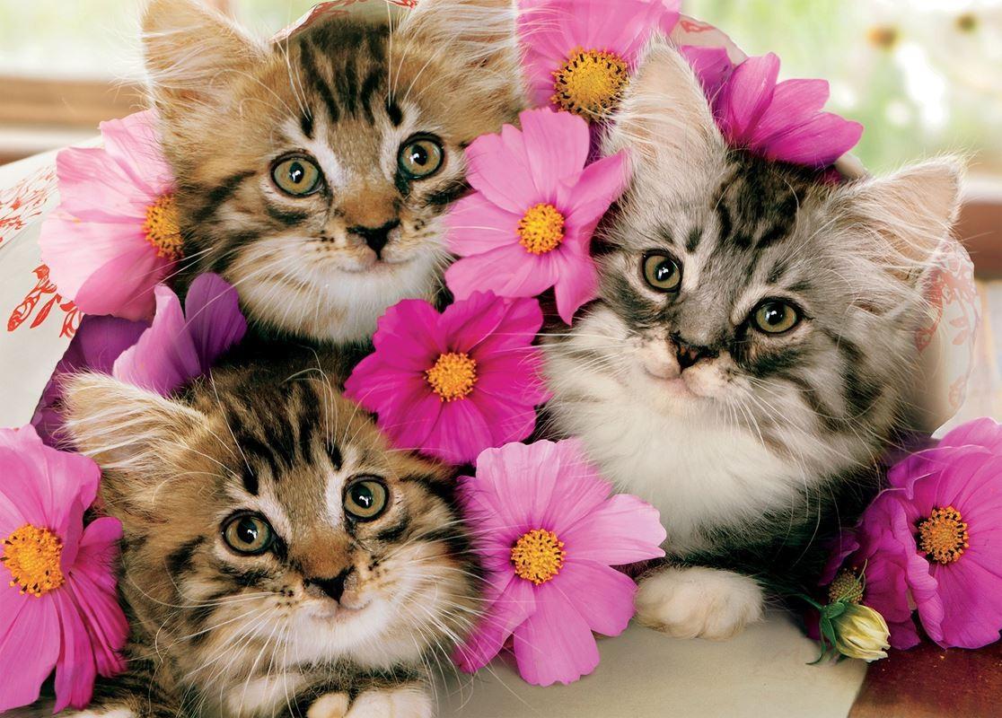 Puzzle Sammeln Puzzle Online - Three kittens