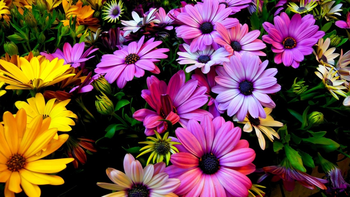 Puzzle Sammeln Puzzle Online - Flowers
