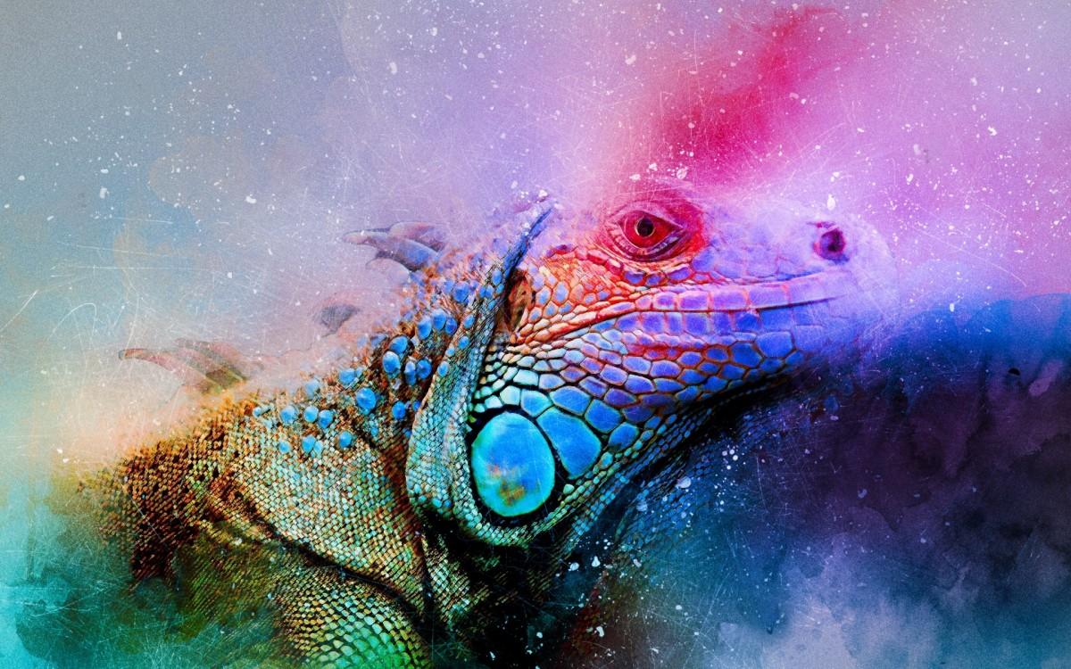 Puzzle Sammeln Puzzle Online - Colorful Reptile