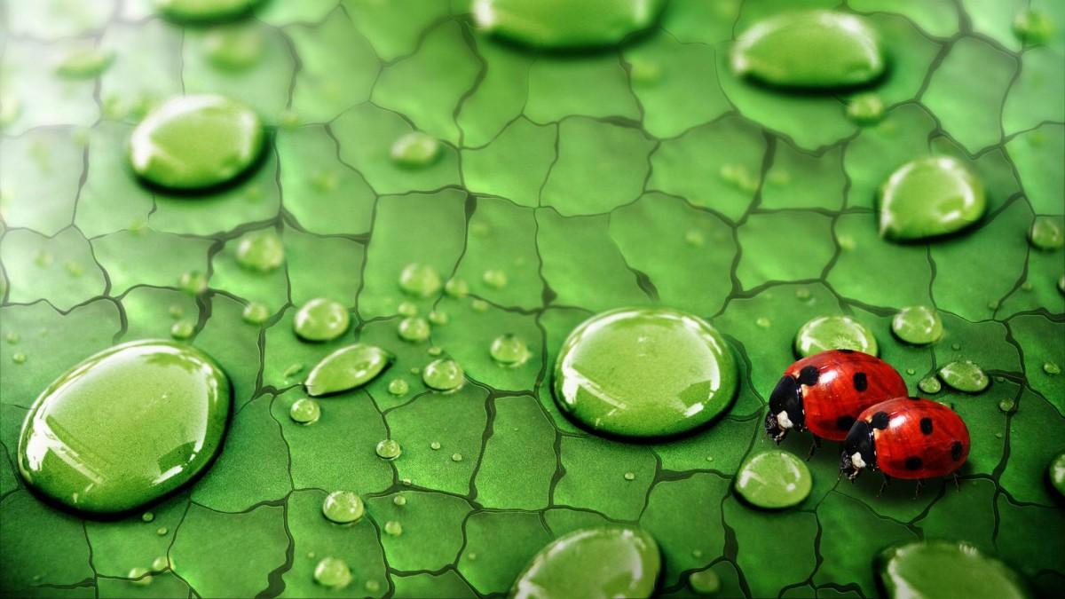 Puzzle Sammeln Puzzle Online - The Morning of Ladybug