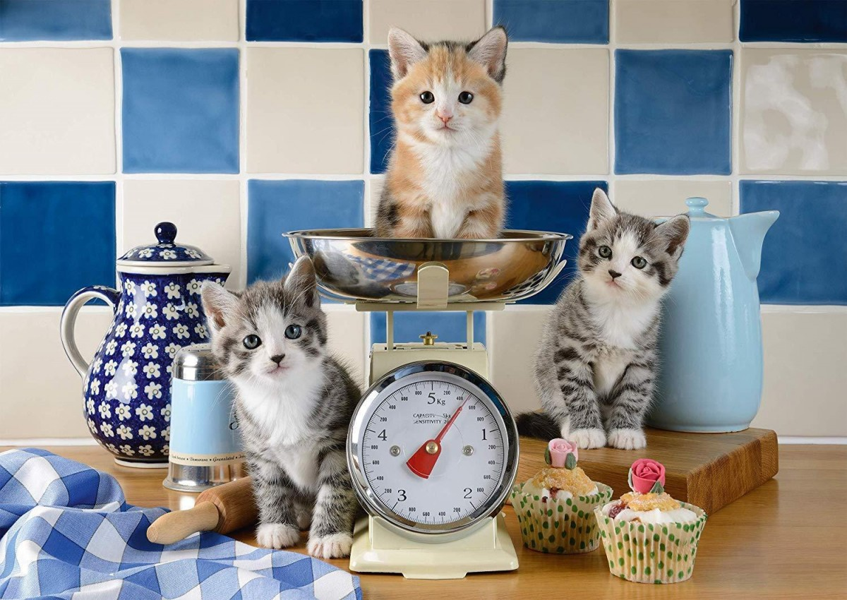 Puzzle Sammeln Puzzle Online - Scales for kittens
