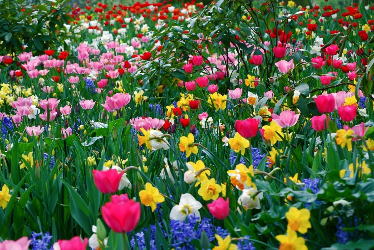Puzzle Sammeln Puzzle Online - Spring has come