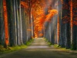 Собирать пазл Alley in autumn онлайн