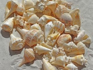 Собирать пазл Sea souvenirs онлайн