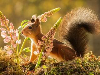 Собирать пазл Squirrel and flowers онлайн