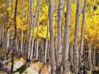 Собирать пазл Birch grove онлайн