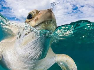 Собирать пазл Big turtle онлайн