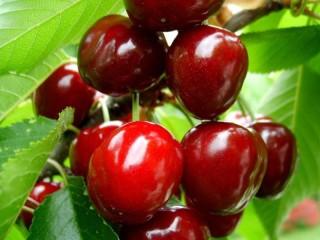 Собирать пазл Sweet cherry 1 онлайн