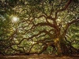 Собирать пазл Wonder tree онлайн