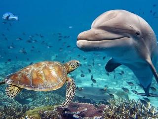 Собирать пазл Dolphin and turtle онлайн