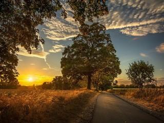 Собирать пазл A tree beside the road онлайн