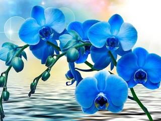 Собирать пазл Blue Orchid онлайн