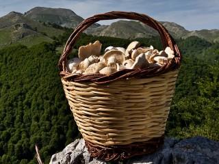 Собирать пазл Mountains of mushrooms онлайн