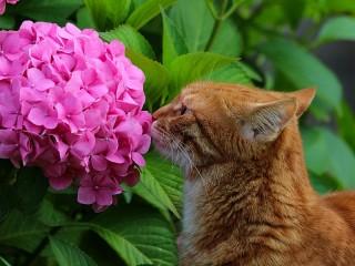 Собирать пазл Hortense and the cat онлайн