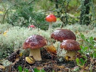 Собирать пазл Mushrooms in the rain онлайн