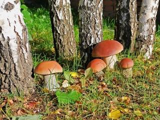 Собирать пазл Mushrooms онлайн