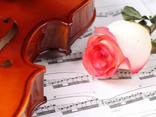 Собирать пазл Violin and rose онлайн