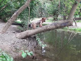 Собирать пазл York by the pond онлайн