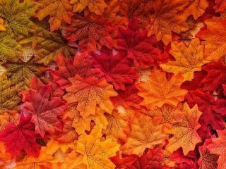 Собирать пазл Maple leaves онлайн