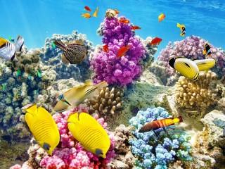 Собирать пазл Koralloviy Rif онлайн