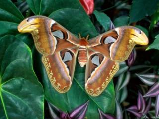 Собирать пазл Brown butterfly онлайн