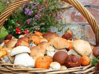 Собирать пазл Basket with mushrooms онлайн