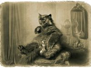 Собирать пазл Behemoth the cat онлайн