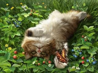 Собирать пазл Cat and butterfly онлайн