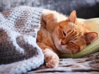 Собирать пазл The cat and the blanket онлайн