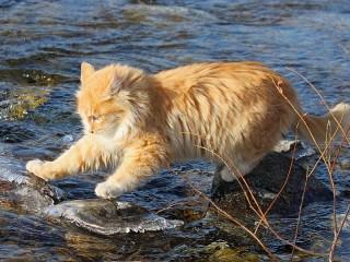 Собирать пазл Cat on the river онлайн
