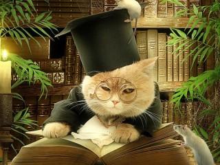 Собирать пазл Booky cat онлайн